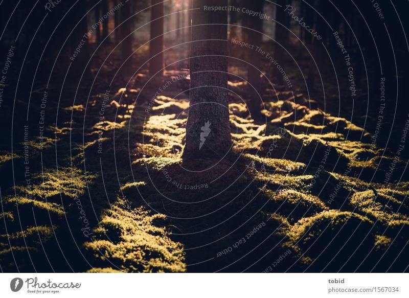 Sonnenschein Natur Landschaft Pflanze Schönes Wetter Baum Gras Sträucher Moos Wald hell einzigartig Idylle Waldlichtung Lichterscheinung Lichtspiel Baumstamm
