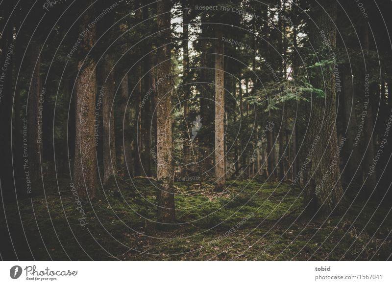 Märchenwald Natur Landschaft Pflanze Baum Gras Sträucher Moos Wald Urwald Hügel geheimnisvoll Baumstamm dunkel mystisch Farbfoto Außenaufnahme Menschenleer