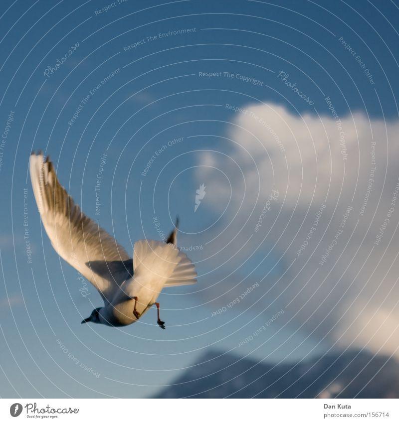 Am Arsch! Vogel außergewöhnlich Hinterteil Schatten Himmel Freude Spielen Möve drehen Bürzel Feder Haltungsnote: 9.9 fliegen Flügel Marionette Schwanz