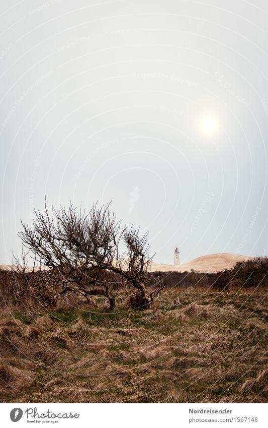 Dünenlandschaft Ferien & Urlaub & Reisen Tourismus Meer Sonne Klima Wetter schlechtes Wetter Wind Sturm Baum Gras Sträucher Wiese Küste Nordsee Leuchtturm