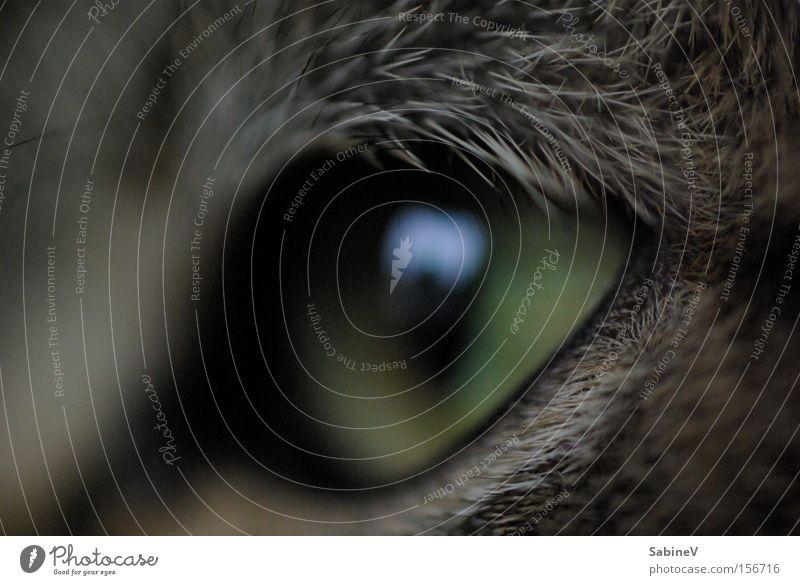 Katze Stil Ausdruck Tier tierisch Natur Physis Konzentration Golfplatz Säugetier Hass