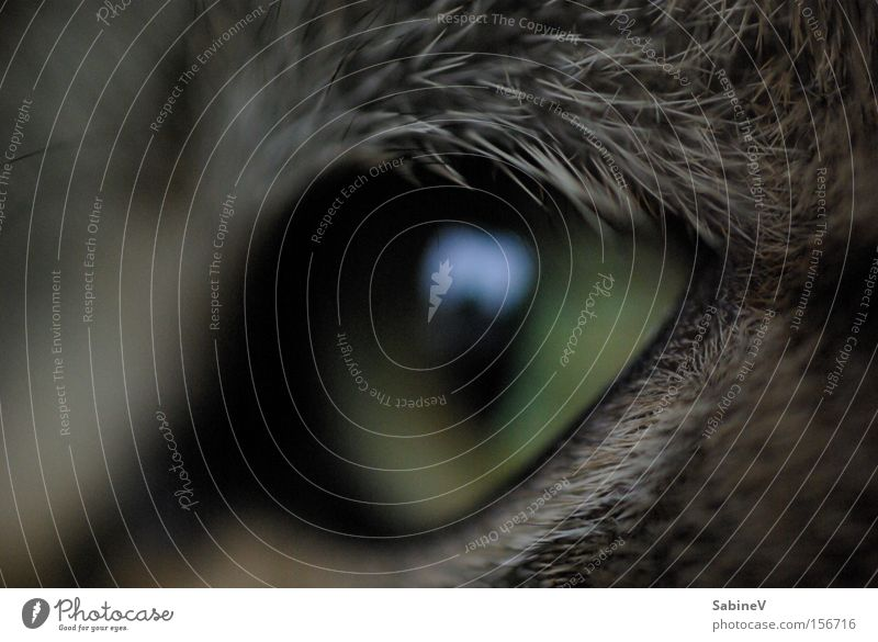 Natur Tier Stil Katze Konzentration tierisch Physis Säugetier Hass Golfplatz Ausdruck