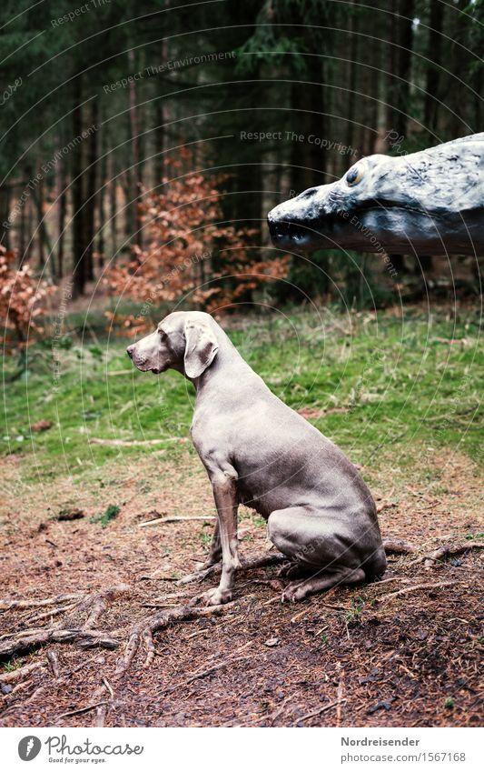 Wir müssen nach vorn schauen.... Jagd Abenteuer Tier Wald Hund 2 beobachten Fressen bedrohlich gruselig Neugier achtsam Wachsamkeit Entsetzen Zukunftsangst