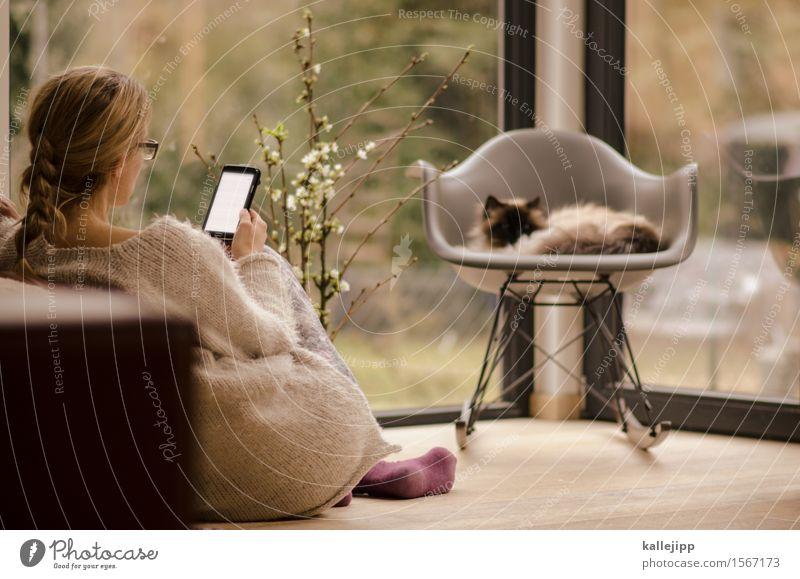 homeoffice Katze Mensch Frau Haus Tier Erwachsene Leben feminin Stil Lifestyle Arbeit & Erwerbstätigkeit Design Wohnung Häusliches Leben elegant Technik & Technologie