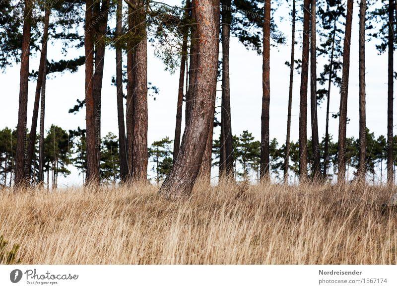 Weiches Gras Ausflug wandern Natur Landschaft Pflanze Frühling Sommer Baum Wiese Wald Wärme weich Einsamkeit Erholung Idylle ruhig Stimmung Waldlichtung Kiefer