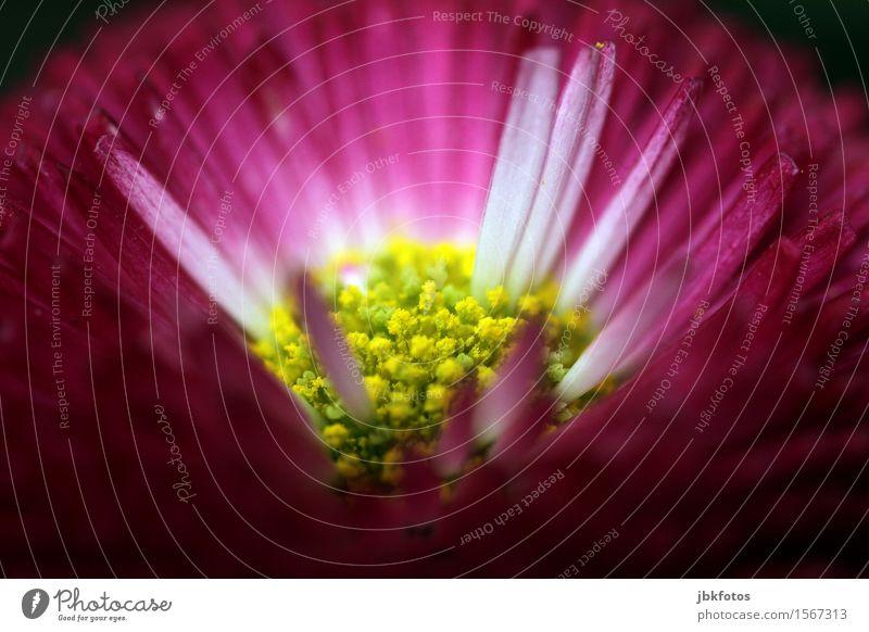 Blüte Natur Pflanze Schönes Wetter außergewöhnlich Duft Kitsch Blume Pollen violett gelb Blühend Nahaufnahme Detailaufnahme Makroaufnahme Menschenleer Licht