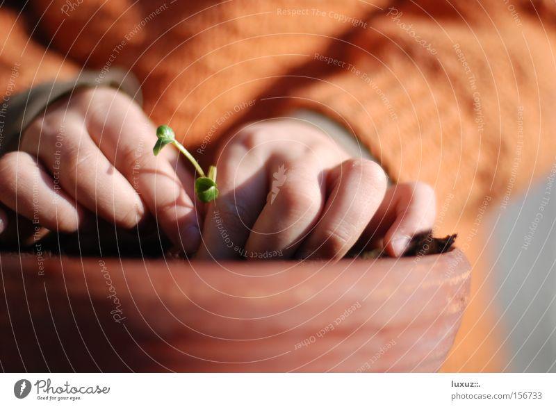 Ernten Was Wir Säen Pflanze Frühling Gesundheit sitzen planen Gemüse Bioprodukte ökologisch Beruf Gärtner Landwirtschaft