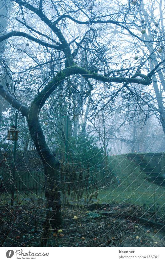 Alter Apfelbaum alt Baum grün Winter Garten grau Nebel Rasen Ast eigenwillig