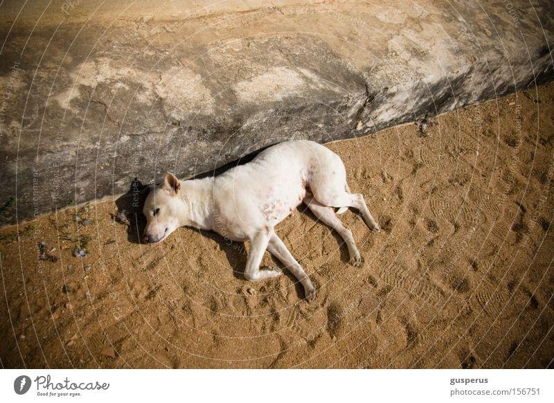 {lazy dog} schön ruhig Hund schlafen Frieden Fell Säugetier bequem Moral Philosophie