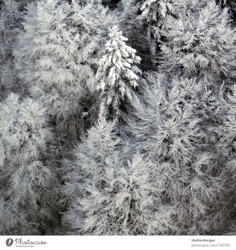 Wattebausch Freiheit Winter Schnee Luftverkehr Eis Frost Baum fliegen Stress Tanne Gewicht belasten Frau Holle Vogelperspektive