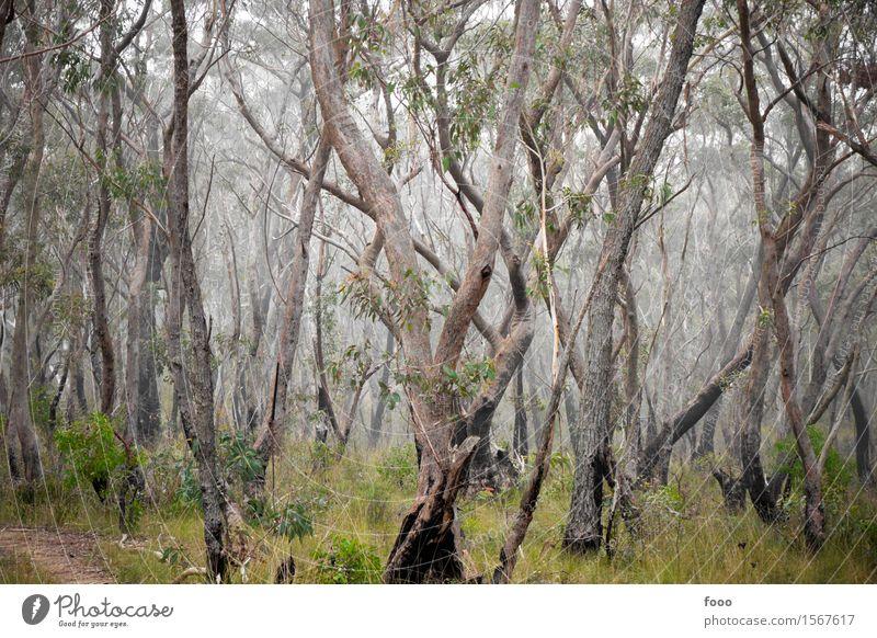 special trees Natur Pflanze grün Baum Landschaft ruhig Tier dunkel Wald Umwelt Herbst Gras außergewöhnlich Zusammensein Nebel wandern