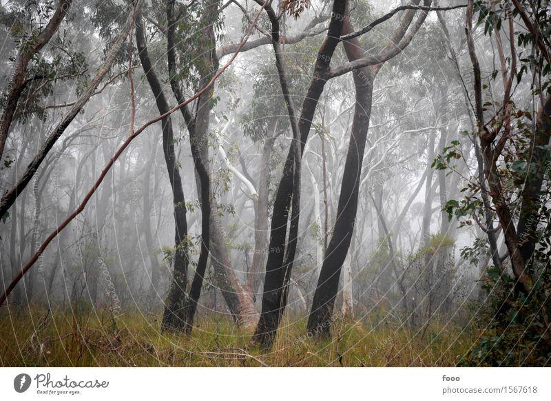 magic forest Natur Pflanze Baum Landschaft Einsamkeit dunkel Wald Herbst Gras Wetter Nebel Angst Wachstum wandern trist Sträucher