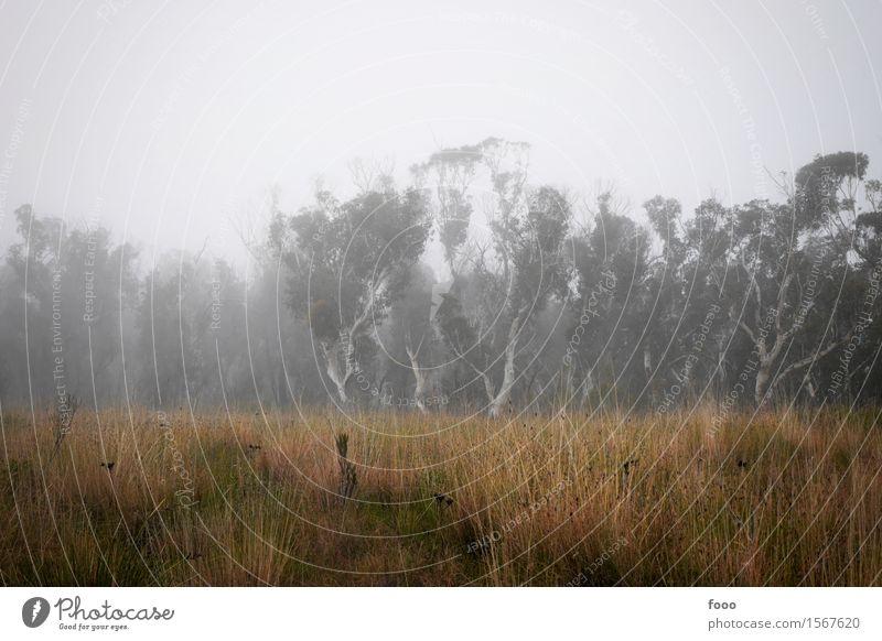 lost in the fog ruhig Ausflug Abenteuer Expedition wandern Natur Landschaft Wolken Herbst Wetter schlechtes Wetter Nebel Dürre Baum Gras Sträucher Wiese Wald
