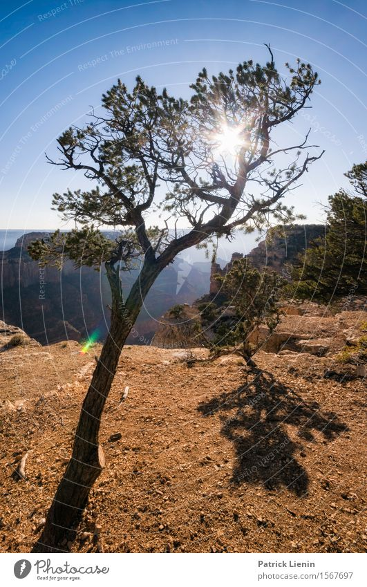 Tree of Life Sinnesorgane Erholung ruhig Ferien & Urlaub & Reisen Abenteuer Sommer Berge u. Gebirge wandern Umwelt Natur Landschaft Pflanze Urelemente Himmel