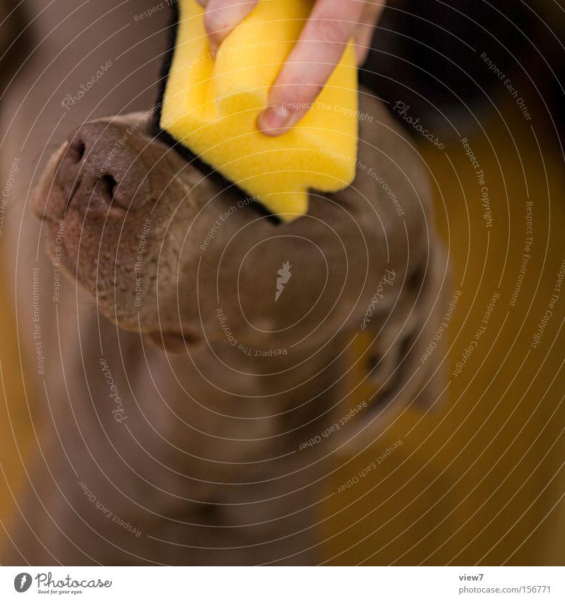 Reinigung Hund schön Freude gelb dreckig frisch Finger Nase Aktion niedlich Sauberkeit Reinigen Fell stoppen streichen Freundlichkeit