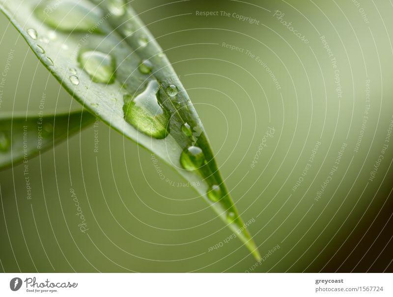 Grünes Blatt Natur Pflanze Farbe Sommer schön grün Baum Wald Umwelt Leben natürlich Gras Garten hell Design