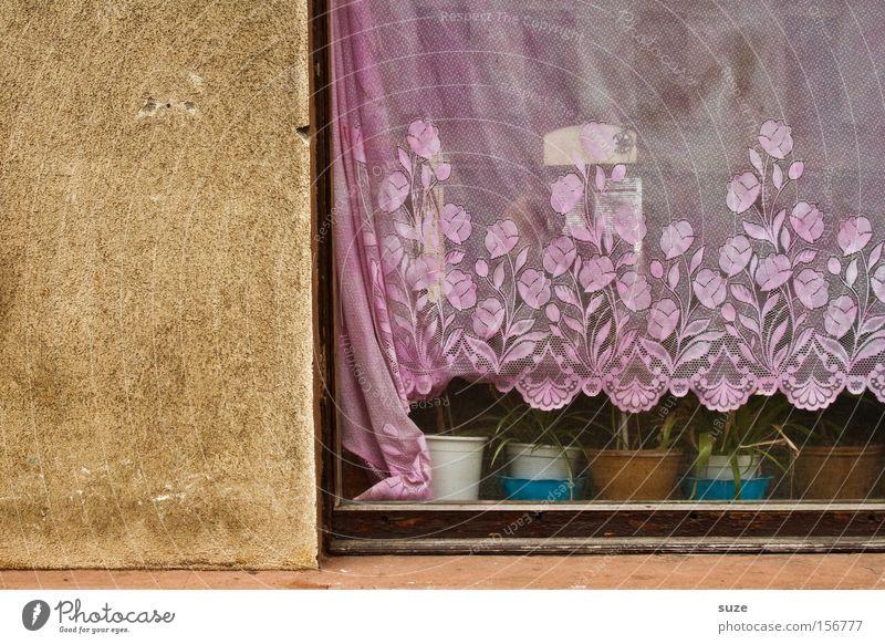 2/3 Sichtschutz Häusliches Leben Mauer Wand Fassade alt authentisch einfach trist trocken rosa bescheiden Einsamkeit Nostalgie stagnierend Vergangenheit Gardine