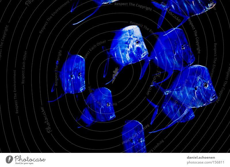 blaue Fischsuppe Wasser Meer Farbe mehrere Tiergruppe Asien viele Aquarium Dubai Schwarm Fischschwarm