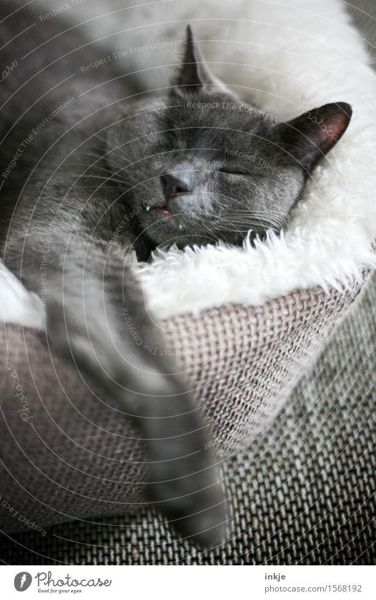 Wenn er schläft,... Katze Erholung ruhig Tier Gefühle Stimmung Zufriedenheit Häusliches Leben Warmherzigkeit weich schlafen Gelassenheit Müdigkeit Haustier Tiergesicht Geborgenheit