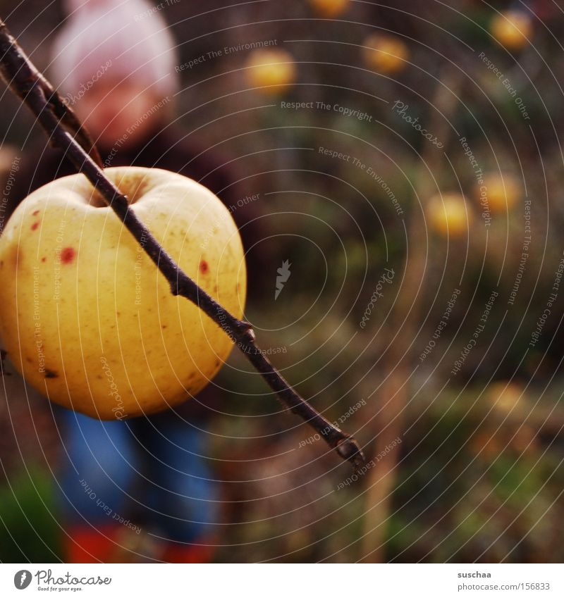 apfel am baum. kind (unscharf) Kind Mädchen Ast Apfel Apfelbaum Ernte Herbst Jahreszeiten kalt Mütze Unschärfe Frucht Außenaufnahme
