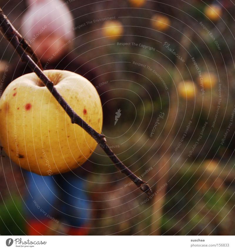 apfel am baum. kind (unscharf) Kind Mädchen kalt Herbst Frucht Ast Jahreszeiten Ernte Mütze Apfel Apfelbaum