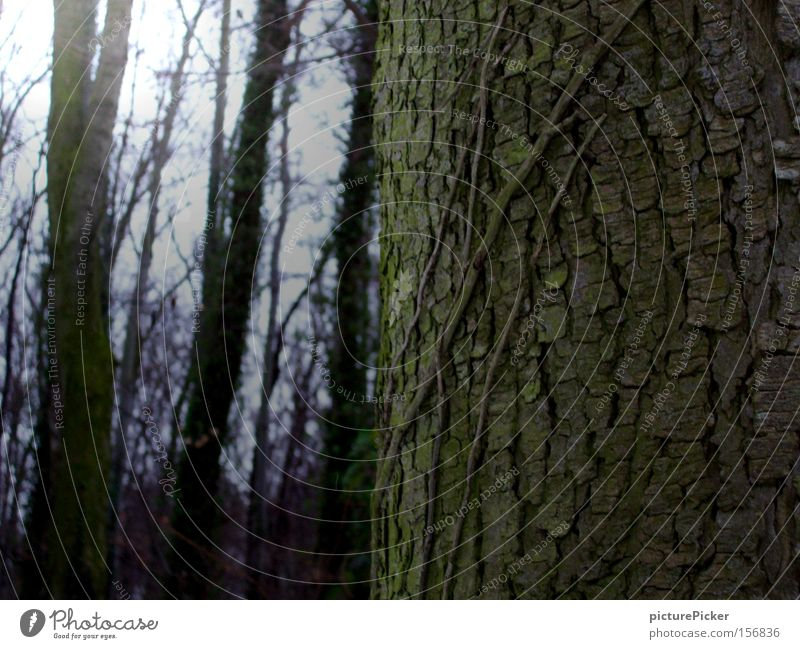 ...alter Baum Natur grün Wald Park Baumstamm Baumrinde