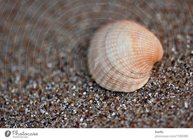 Muschel & Co. V Natur Ferien & Urlaub & Reisen Sommer Strand braun Sand Sommerurlaub Sandstrand Urlaubsstimmung Sandkorn Muschelschale Herzmuschel