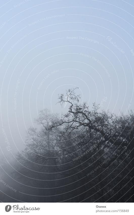 Nebelkrone Himmel Baum Winter dunkel Holz Trauer Ast Verzweiflung bizarr Baumkrone Zweig kahl Dunst bedeckt