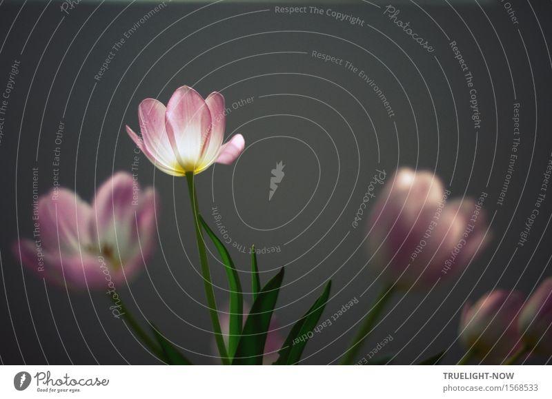 Ach... Blümchen grün schön Blume Erholung Erotik Blatt ruhig gelb Blüte Frühling grau Wohnung Raum frisch elegant Dekoration & Verzierung