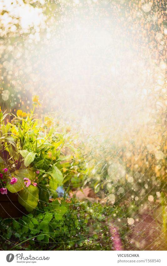 Schöne Sommerblumen Garten Lifestyle Design Häusliches Leben Umwelt Natur Landschaft Pflanze Sonnenlicht Frühling Herbst Schönes Wetter Blume Gras Sträucher