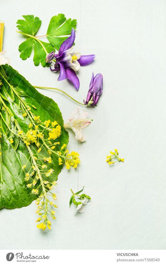 Schöne Gartenblumen mit Blättern und Blüten Natur Pflanze Sommer Blume Blatt gelb Innenarchitektur Frühling Gras Stil Design Dekoration & Verzierung Blühend