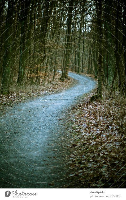 Der Weg Natur Baum Pflanze Winter Blatt Einsamkeit Wald dunkel kalt Herbst Bewegung grau träumen Traurigkeit Wege & Pfade Denken