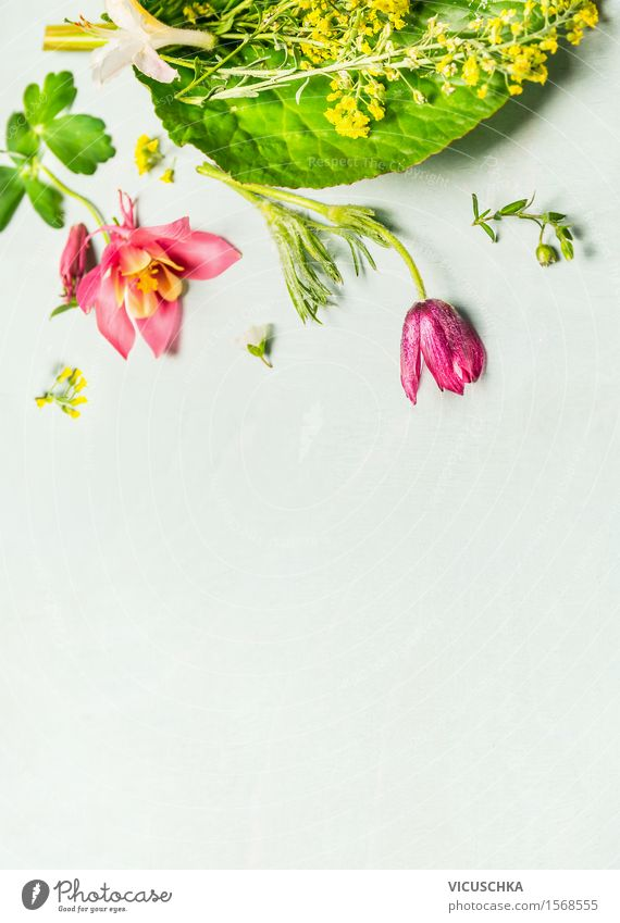 Schöne GartenBlumen auf hellgrünem Hintergrund Stil Design Freizeit & Hobby Sommer Häusliches Leben Dekoration & Verzierung Tisch Natur Pflanze Frühling Blatt