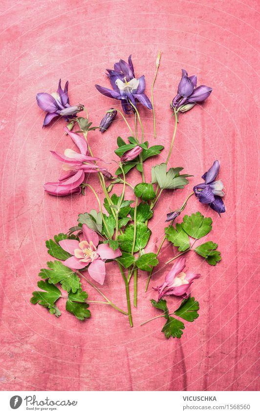 Garten Blumen auf rosa Shabby Chic Hintergrund Stil Design Häusliches Leben Dekoration & Verzierung Tisch Natur Pflanze Blatt Blüte Akelei Pflanzenteile