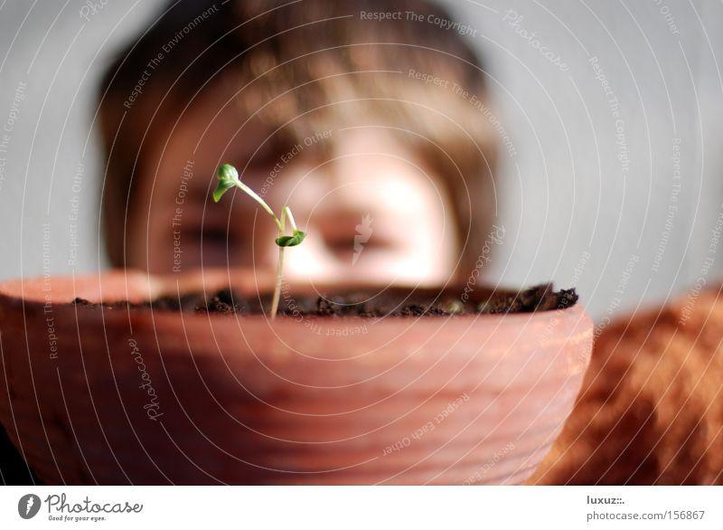 warten Pflanze Frühling Wachstum beobachten Neugier Wissenschaften Wachsamkeit Kindererziehung Erscheinung geduldig forschen staunen