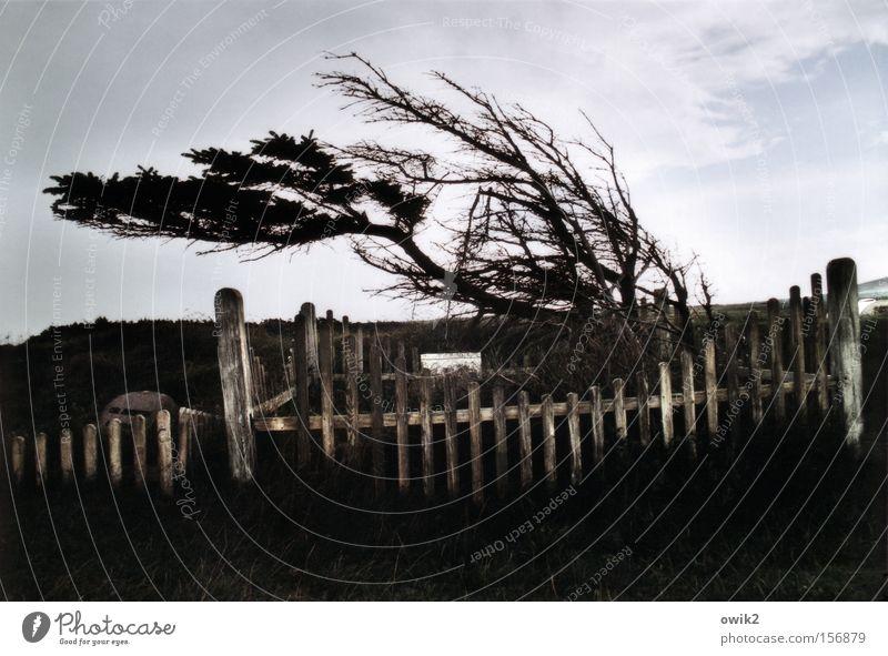 Windschief Ferien & Urlaub & Reisen Tourismus Ausflug Ferne Freiheit Luft Himmel Wolken Wetter Sturm Jütland Nordeuropa Zaun historisch Trauer Verfall