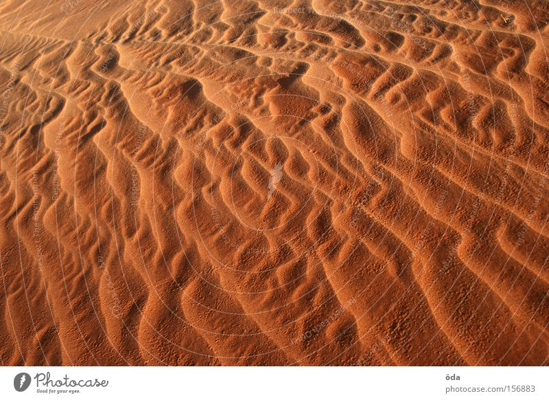 Sandgeflüster Düne Wüste Wind Strukturen & Formen fließen Muster Natur trocken rot glühen Sandsturm Wellen Formation Farbe