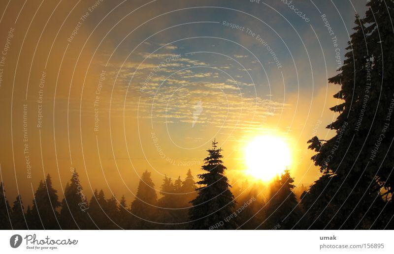 Vernebelt Sonne Sonnenuntergang Nebel Abenddämmerung Winter Wald Hochnebel Brocken Winterlicht Wintertag Winterwald Nachtwanderung Tanne Himmel