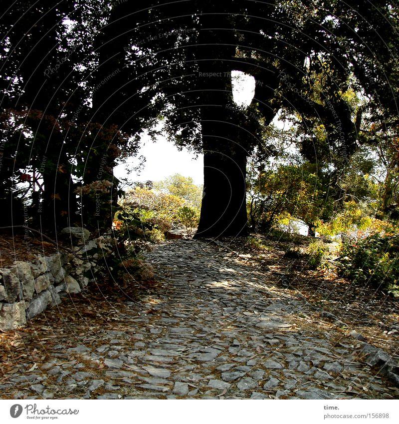 Schutz und Zuversicht Natur Baum ruhig Erholung Wand Garten Stein Mauer Wege & Pfade Park Kraft Verkehrswege Pflastersteine Naturstein Baumschatten