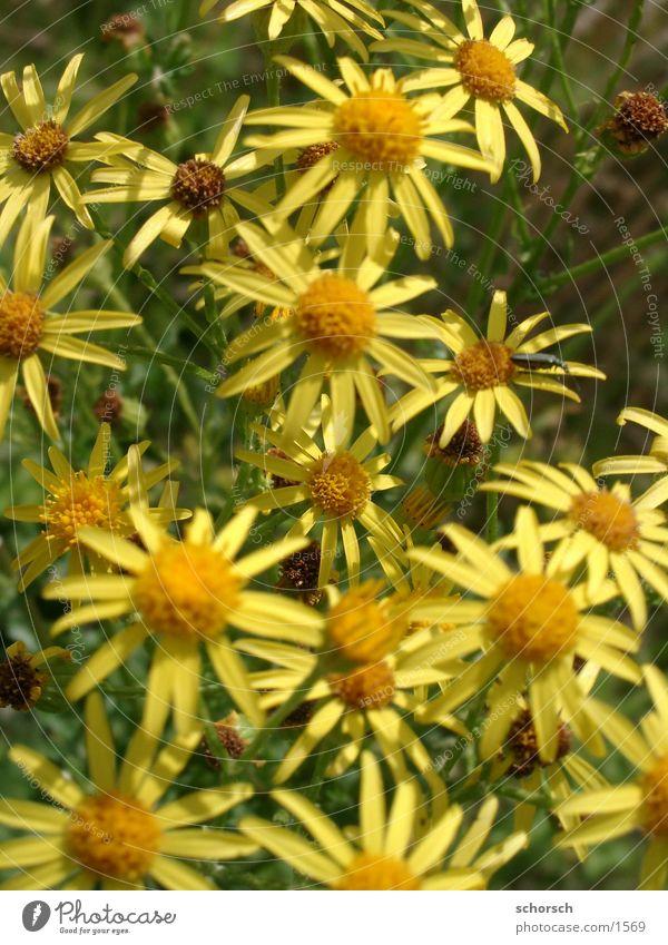 Käfer auf Blume gelb grün Blüte Tier Pflanze Park