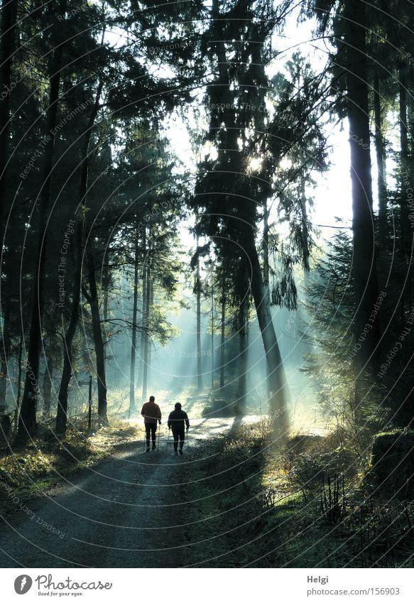 zwei Personen walken bei Sonnenlicht im Wald Farbfoto Außenaufnahme Tag Licht Schatten Silhouette Sonnenstrahlen Gegenlicht Freude Freizeit & Hobby wandern