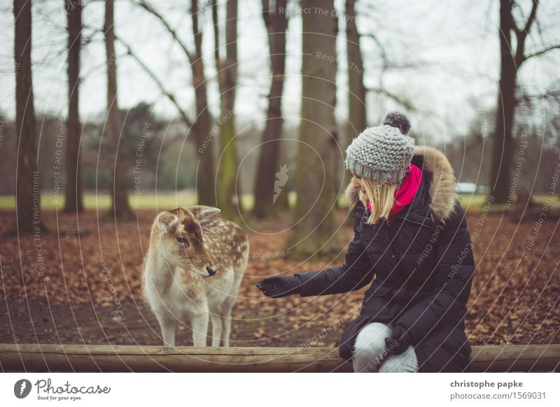 Anfüttern Junge Frau Jugendliche Erwachsene 1 Mensch 18-30 Jahre Natur Herbst Baum Park Wald Mantel Mütze blond Tier Wildtier Fell Zoo Streichelzoo Reh