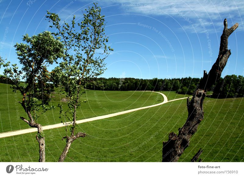 Landschaft Straße blau Himmel Klarheit Gras Baum Begeisterung grün Außenbereich horizontal Blatt