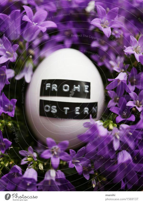 Frohe Ostern Natur Pflanze Frühling Sommer Blume Blatt Blüte Grünpflanze Zeichen Schriftzeichen Ziffern & Zahlen Gefühle Stimmung Ei Osternest Blühend violett