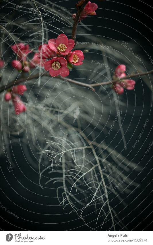 something between winter and spring Pflanze Farn Blüte Holzapfel blau rosa weiß Farbfoto Studioaufnahme Nahaufnahme Menschenleer Kunstlicht Starke Tiefenschärfe