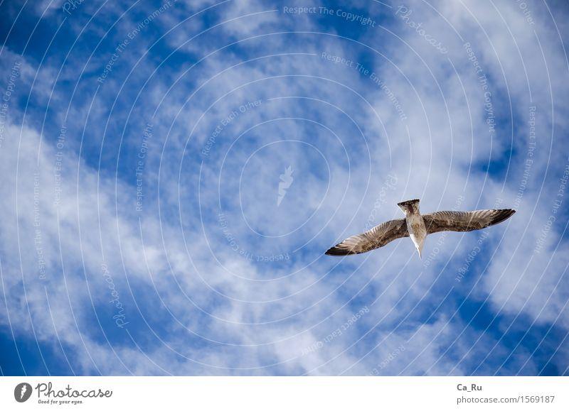 Freier Flug Himmel blau schön weiß Wolken Tier schwarz Gefühle Glück grau Stimmung Vogel Zufriedenheit elegant frei Wildtier
