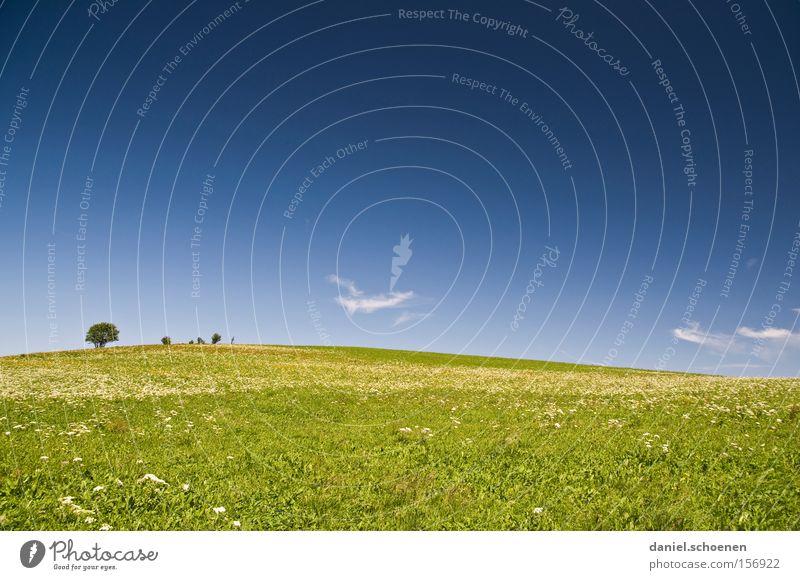 wird schon noch - irgendwann Frühling Sommer Himmel Gänseblümchen Löwenzahn Wärme Wiese blau gelb Hügel Schwarzwald