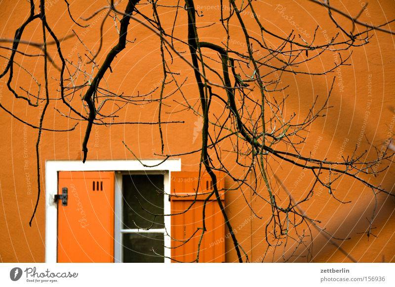 Tuschkasten Baum Winter Haus Fenster oben Frühling Fassade offen Ast Hälfte Zweig kahl Fensterladen Stalking