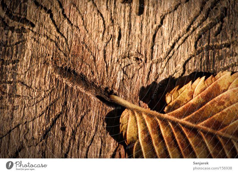 Blattflucht alt Blatt Herbst Holz braun Park Baumstamm Käfer Schaden Wurm Borkenkäfer