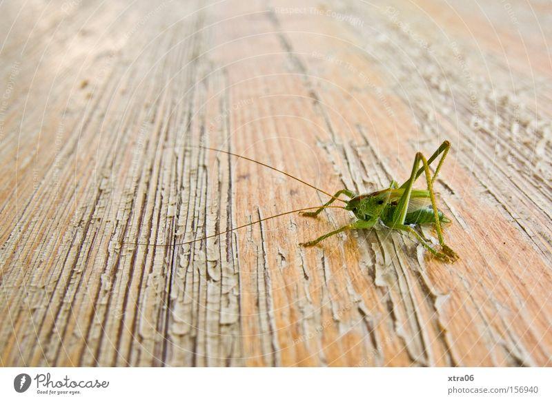 """""""grill""""abend Sommer Tisch Insekt Lebewesen Holztisch Bierbank Heimchen"""